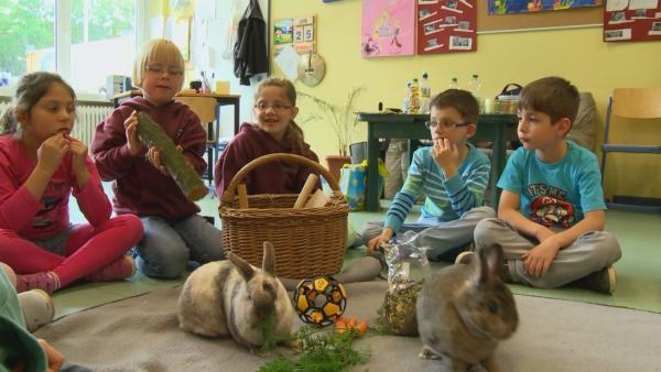 Ria, Milla und ihre Freunde helfen Tieren. | Rechte: NDR