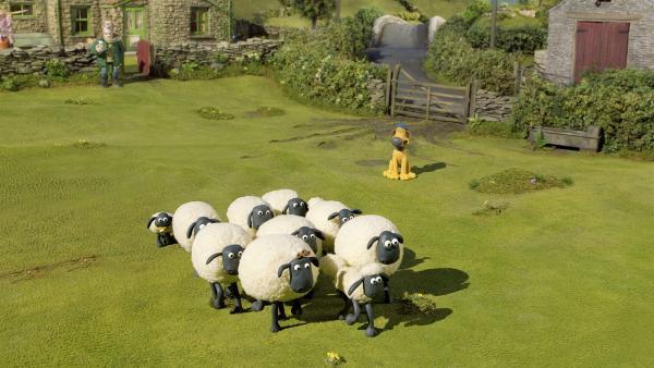 Ein seltener Anblick: Für einen Wettbewerb gehen die Schafe in Reih und Glied.   Rechte: WDR/Aardman Animation Ltd./BBC