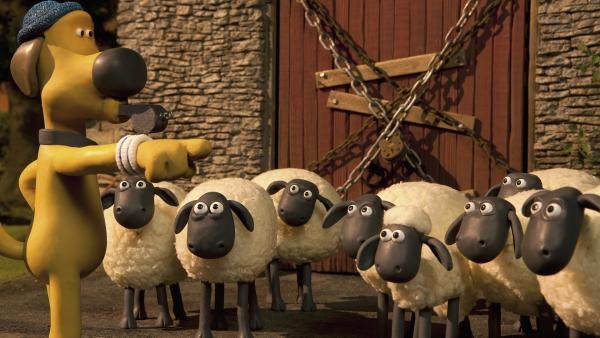 Zutritt verboten! Bitzer hat für die Schafe eine neue Unterkunft.   Rechte: WDR/Aardman Animation Ltd./BBC