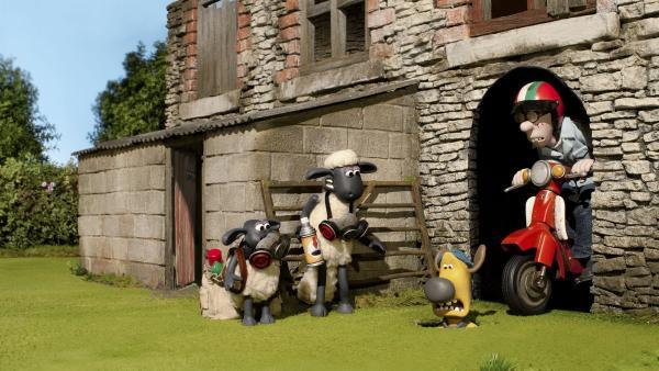 Mit ihren Streichen setzen Shaun und Timmy Bitzer heute ganz schön zu. | Rechte: WDR/Aardman Animation Ltd./BBC