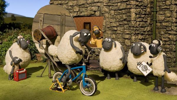 Der kaputte Fernseher des Bauern hält die Schafe ganz schön auf Trab. | Rechte: WDR/Aardman Animation Ltd./BBC
