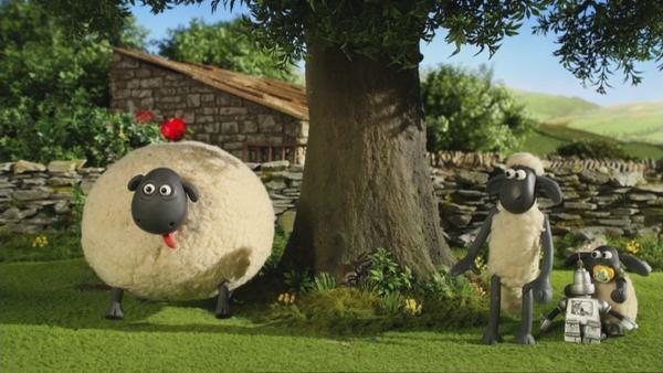 Die Schafsdamen sind von dem charmanten Neuzugang entzückt – vor allem Shirley.    Rechte: © KiKA