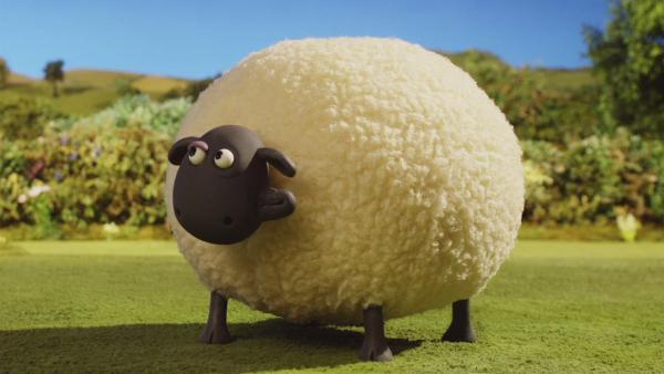 Shaun muss das große Schaf Shirley jeden Morgen auf die Weide schieben.    Rechte: © KiKA