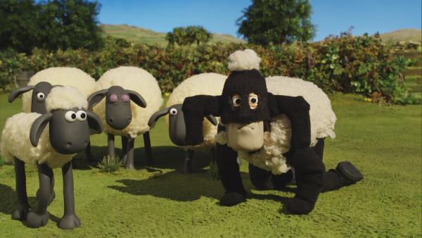 Ein ungebetener Gast hat sich unter die Schafe gemischt.  | Rechte: © KiKA