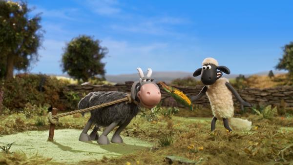 Von frischem Mais bekommt die Ziege nie genug. | Rechte: WDR/BBC/Animation Ltd.