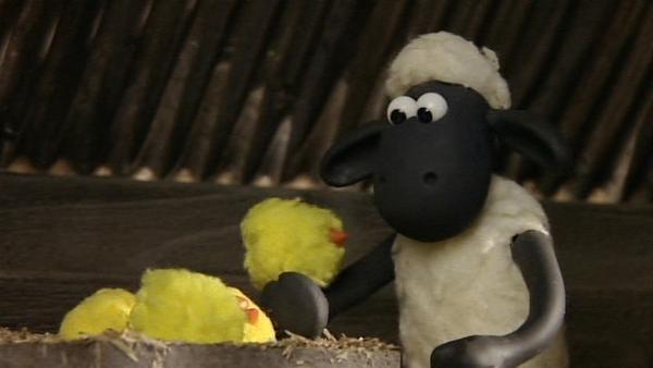 Shaun beobachtet die Küken beim Schlüpfen und wird gleich als Mutter adoptiert.   Rechte: WDR/Aardman Animation Ltd./BBC