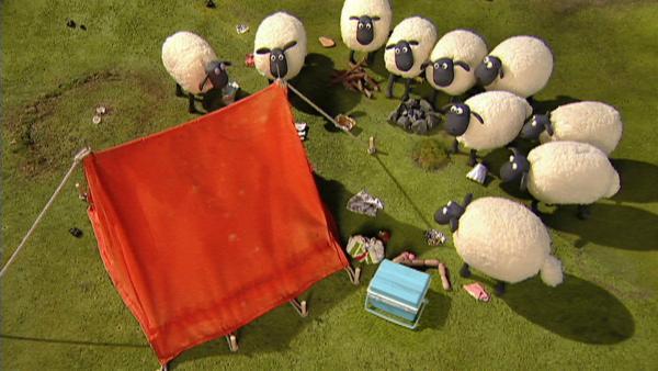 Ein Zelt auf ihrer Wiese und Chaos drumherum - Die Schafe stehen ratlos und neugierig davor.   Rechte: WDR/Aardman Animation Ltd./BBC