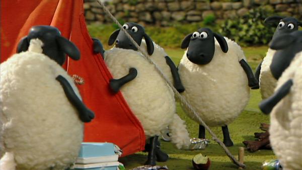Die Schafe können ihre Neugier nicht bremsen und wagen einen Blick in's Zelt des Besuchers.   Rechte: WDR/Aardman Animation Ltd./BBC