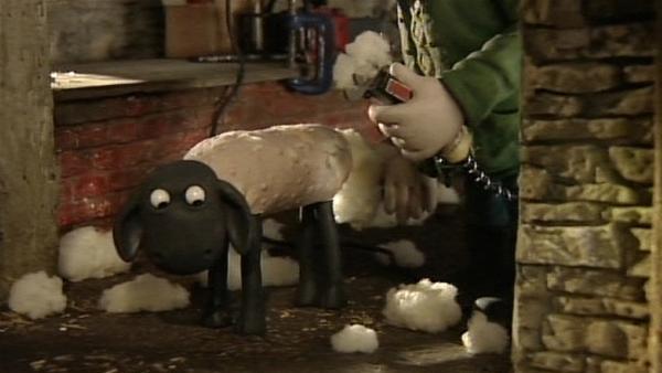Das erste Schaf ist kahl geschoren. Können sich die anderen verstecken? | Rechte: WDR/Aardman Animation Ltd./BBC