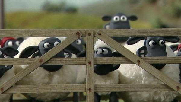Eingepfercht! Müssen die Schafe hilflos zusehen, wie der Farmer den alten Baum fällt? | Rechte: WDR/Aardman Animation Ltd./BBC