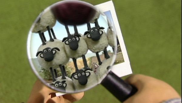 Ist gar nicht einfach alle Schafe auf einem Bild zu zeigen. Das geht nur übereinander.   Rechte: WDR/Aardman Animation Ltd./BBC