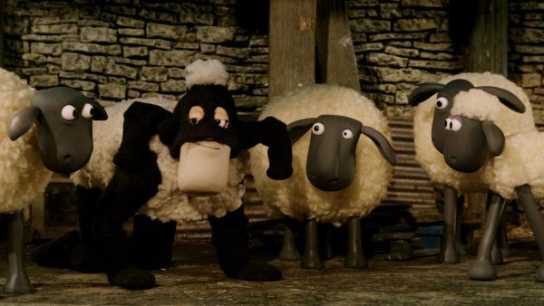 Das falsche Schaf | Rechte: WDR
