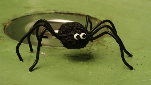Monster mit acht Beinen | Rechte: WDR