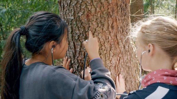 Ha Chau und Matilda hören den Baum ab. | Rechte: MDR/Cine Impuls Leipzig