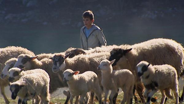 Ivan und seine Schafe | Rechte: ZDF/HRT Kroatien/EBU