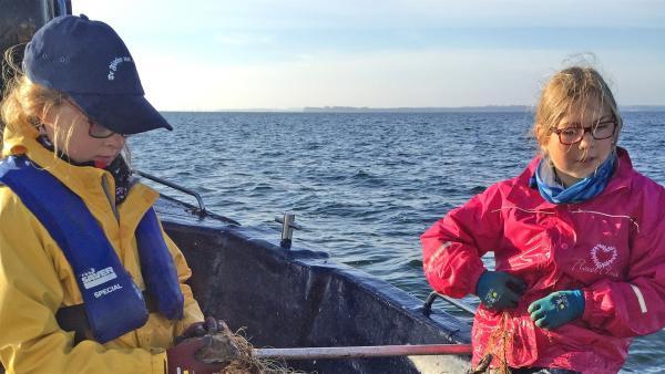 Johanna (12) und Paula (10) sind Fischerschwestern und fahren seit ihrer Geburt mit dem Kutter aufs Wasser raus. | Rechte: ZDF/Jan-Ole Sieg
