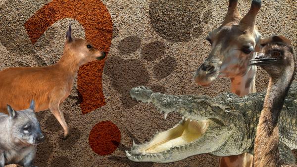 Collage von Tieren und Tierspuren | Rechte: KiKA
