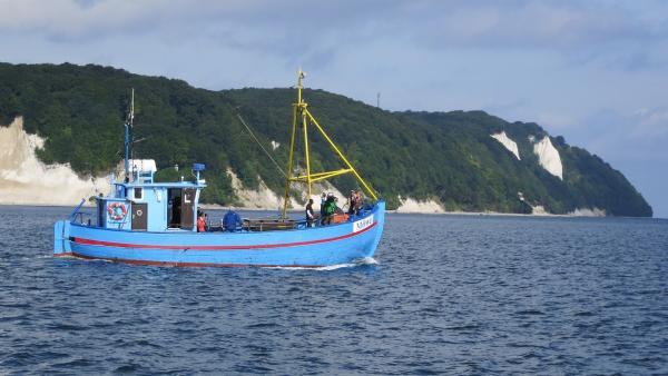 Singa fährt mit Alex auf einem Kutter raus auf die Ostsee, um vor den Kreidefelsen von Rügen nach Robben Ausschau zu halten. | Rechte: KiKA/ZDF/Franziska Rülke