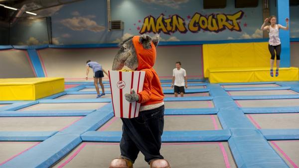 Neugierig wie TanzTapirl ist, geht er in die Trampolinhalle und steht dann staunend vor Menschen, die durch die Luft fliegen. | Rechte: KiKA/MingaMedia