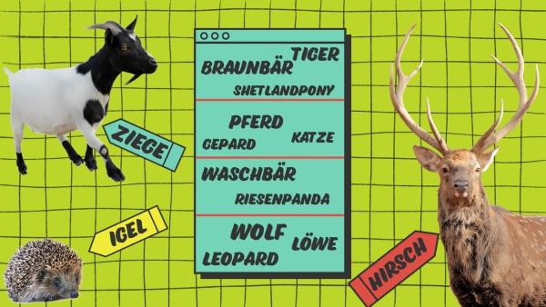 AR Säugetiere | Rechte: KiKA / Coulorbox