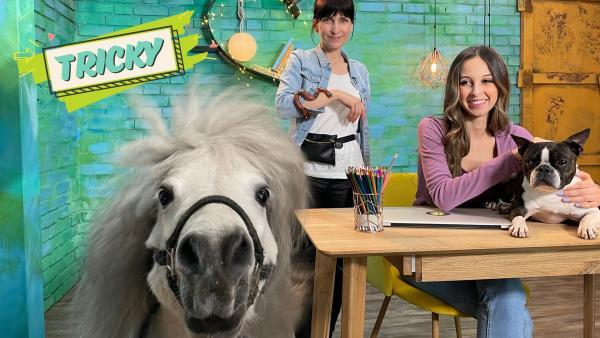 Team Timster hat wieder eine super Frage bekommen: Wie lernen Filmtiere Tricks und Kommandos? Filmtiertrainerin Nadin (li.) ist bei Soraya zu Gast und bringt weitere besondere Gäste mit: Ein süßes Pony, eine echte Schlange und natürlich zeigt auch der Star der Sendung Jimmy, was er kann. | Rechte: KiKA/Inka Kiwit