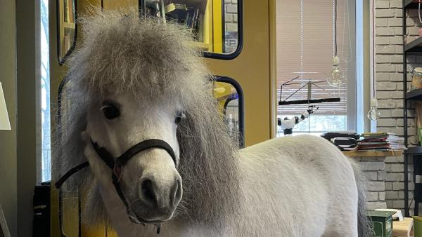 "Ein süßes Pony ist bei ""Team Timster"" zu Gast. | Rechte: KiKA/Inka Kiwit"