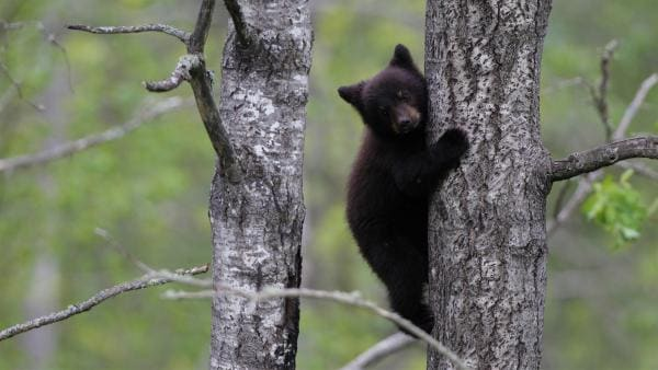 Manche Tiere müssen schon früh lernen zu klettern.    Rechte: KiKA