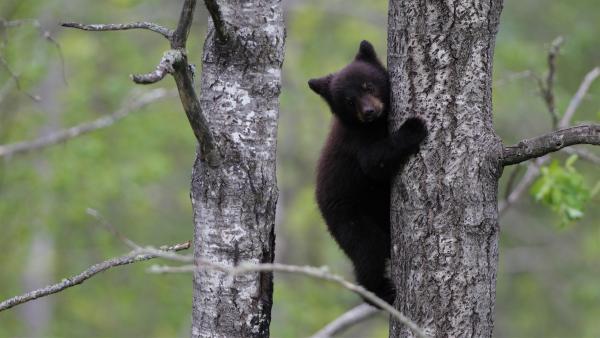 Manche Tiere müssen schon früh lernen zu klettern.  | Rechte: KiKA