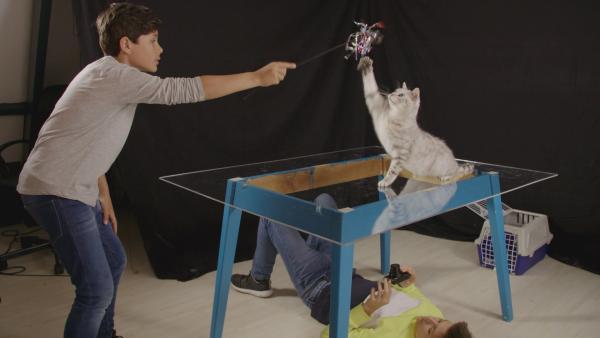 Milan und Boris suchen ein Antwort darauf, warum Katze Tara es geschafft hat, den aggressiven Nachbarshund zu verscheuchen. Dazu filmen sie die Katze beim einem Sprung. | Rechte: NDR/NTR/Ketnet 2019
