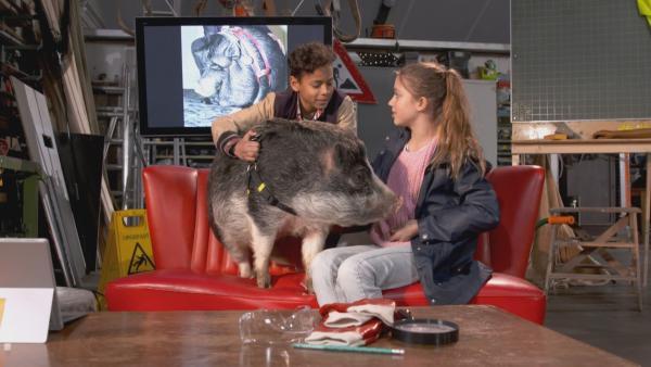 Jamey und Lina haben ein Schwein zu Besuch. | Rechte: NDR/NTR/Ketnet 2019
