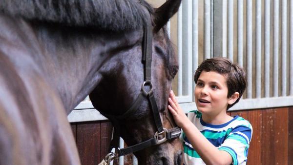 Boris streichelt ein Pferd. | Rechte: NDR/NTR/Ketnet 2019