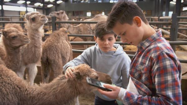 Milan und Boris besuchen eine Kamelfarm in Holland. | Rechte: NDR/NTR/Ketnet 2019