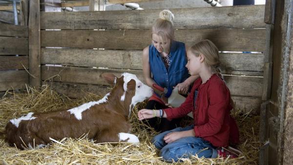 Nelly (Jule-Marleen Schuck) und Paulina (Tabea Hug) tun alles, damit das neugeborene Kalb überleben kann. | Rechte: SWR/Maria Wiesler