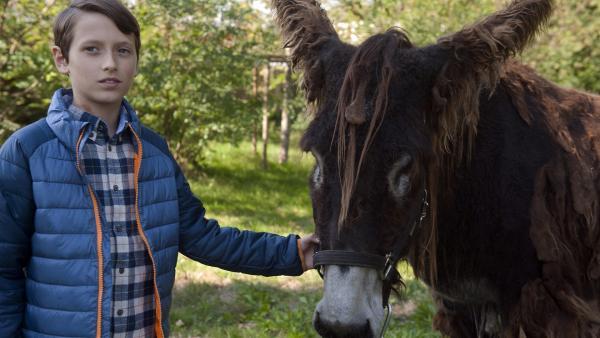 Der introvertierte Tom (Nemo Frenzel) will unbedingt seinen Poitou-Esel Portos behalten.   Rechte: SWR/Maria Wiesler