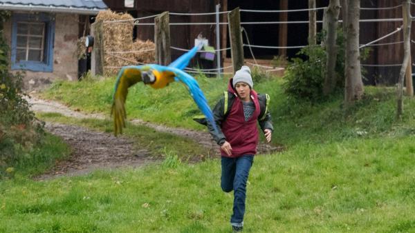 Papagei Bingo bringt Jan (Guiliano Marieni) auf die richtige Fährte.  | Rechte: SWR/Maria Wiesler