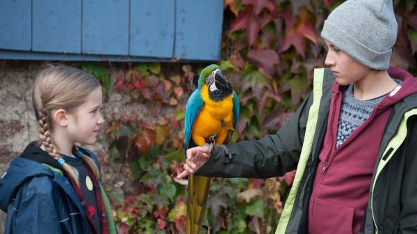Jan (Guiliano Marieni) ist begeistert vom Papagei Bingo, an Lucy (Paulina Schnurrer) muss er sich noch gewöhnen.  | Rechte: SWR/Maria Wiesler