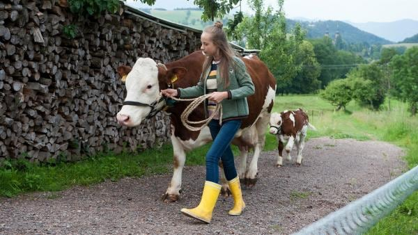 Paulina (Tabea Hug) entführt ihre Kuh Felicia mit deren Kalb Prinzi. | Rechte: SWR/Maria Wiesler