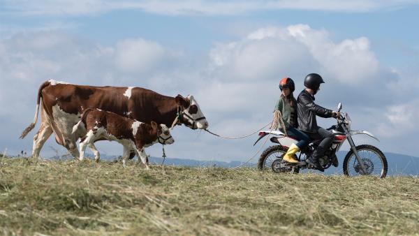 Paulina (Tabea Hug) bekommt Hilfe von ihrem großen Bruder Pawel. Mit ihm führt sie ihre Kühe über die Berge. | Rechte: SWR/Maria Wiesler