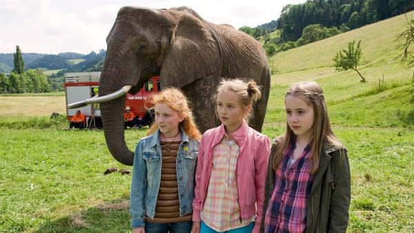 v.li.n.re.: Celine (Zora Achtnich), Emma (Nele Guderian) und Greta (Enya Elstner) stellen traurig fest, dass der Zirkus weg ist, aber sie haben ihren Elefanten einfach auf der Wiese stehen lassen. | Rechte: SWR/Maria Wiesler