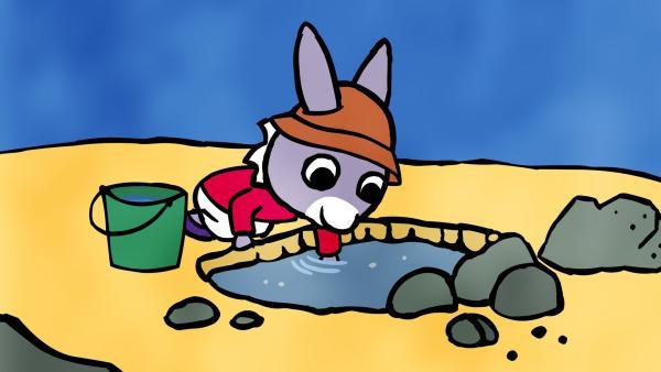 TROTRO geht mit seinem Eimer am Strand entlang und will Krebse fangen.   Rechte: KiKA/Storimages