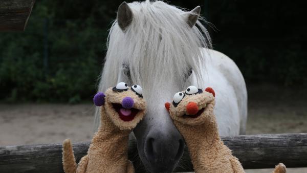 Jan und Henry machen sich darüber Gedanken, warum ihre Nasen unterschiedliche Farben haben. Überhaupt gibt es so viele verschiedene Personen, die alle ganz anders sind, zum Beispiel im Zoo: Da gibt es Tiere mit langen Hälsen, mit Punkten, großen Augen oder dickem Fell. | Rechte: rbb/bigSmile Ent./NDR/MDR