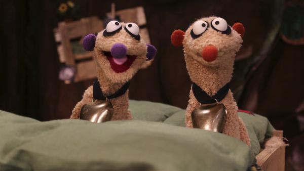 Die Erdmännchen Jan und Henry sitzen mit Glocken um den Hals in ihrem Bett.   Rechte: rbb/bigSmile Ent./NDR/MDR