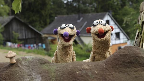 Die Erdmännchen Jan und Henry landen auf der Suche nach einer Königin auf einem Bauernhof.   Rechte: rbb/bigSmile Ent./NDR/MDR