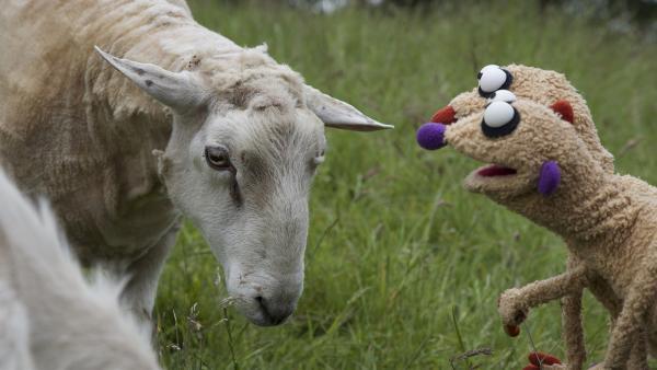 Die Erdmännchen Jan und Henry machen eine tierische Bekanntschaft. | Rechte: rbb/bigSmile Ent./NDR/MDR