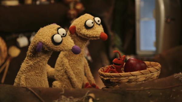 Eine Ameise macht sich am Obst von Jan und Henry zu schaffen. | Rechte: rbb/bigSmile Ent./NDR/MDR