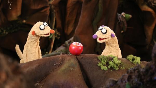 Die Erdmännchen Jan und Henry können nicht schlafen, weil ein Mammut sich einen Smoothie aus Wassermelone, Kürbis und Kokosnuss macht. | Rechte: rbb/bigSmile