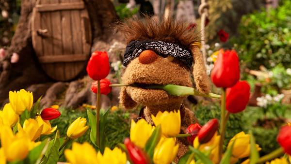 Moppi ist bereit für neue Abenteuer. | Rechte: rbb/Christian Merten
