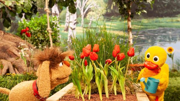 Es ist sehr heiß und Schnatterinchen gießt ihr Blumenbeet. | Rechte: rbb/Christian Merten