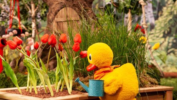 Schnatterinchen pflegt ihre Blumen. | Rechte: rbb/Christian Merten