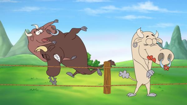 Carlos, der Stier ist in Carmencita, die wunderschönste Kuh auf Weiden, verliebt. | Rechte: NDR/rbb/Hahn Film AG
